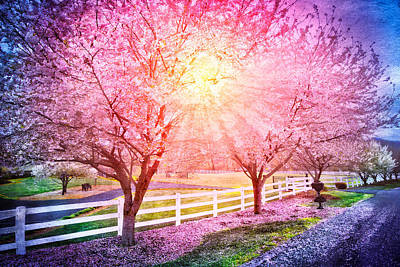 Gate Watercolor Photograph - Light In The Cherry Trees by Debra and Dave Vanderlaan