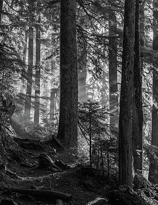 Photograph - Light In The Forest by Angie Vogel