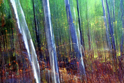 Light In The Forest Original by Bill Morgenstern