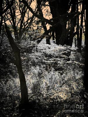 Photograph - Light In The Forest by Marcia Lee Jones