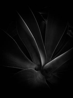 Fun Patterns - Light in the Shadows by Photography by Tiwago
