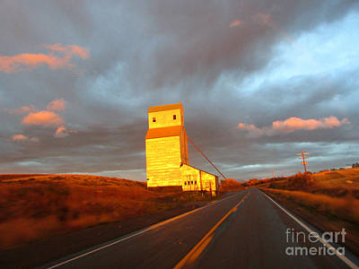 Photograph - Light Just Right by Janice Westerberg
