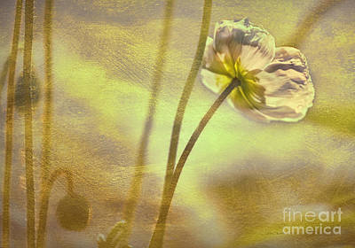 Photograph - Light Lovely by Jean OKeeffe Macro Abundance Art
