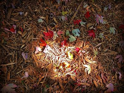 Photograph - Light Of Autumn by Rodney Lee Williams