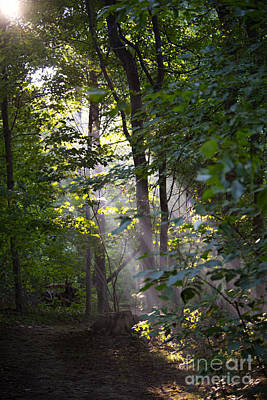 Photograph - Light On Forest Path by David Arment