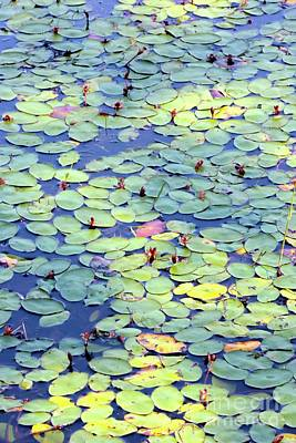 Photograph - Light On Lily Pads by Carol Groenen