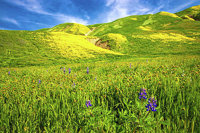 Photograph - Light On Spring At Wind Wolves Preserve by Lynn Bauer