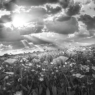 Photograph - Light On The Wildflower Field In Black And White by Debra and Dave Vanderlaan