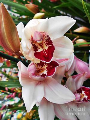 Photograph - Light Pink Cymbidium Orchid 2 by Erika H