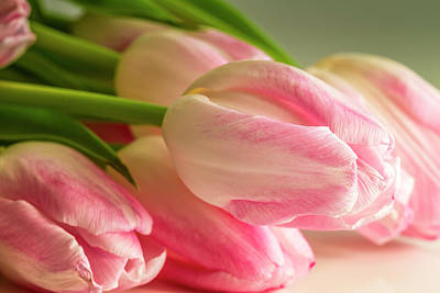 Photograph - Light Pink Tulips In Sunlight by Teri Virbickis
