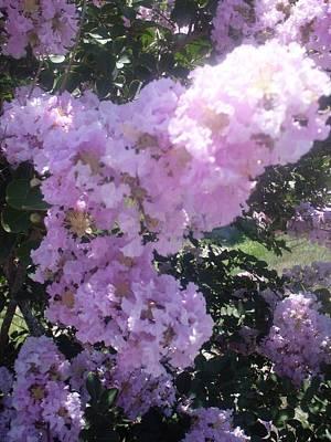 Light Purple Crape Myrtle Flowers Art Print by Warren Thompson