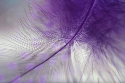 Photograph - Light Purple Dream by Jenny Rainbow