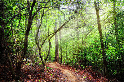 Photograph - Light Rays On The Trail by Debra and Dave Vanderlaan