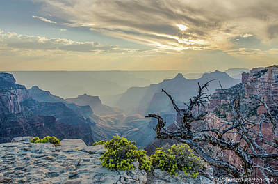 Photograph - Light Seeks The Depths Of Grand Canyon by Gaelyn Olmsted