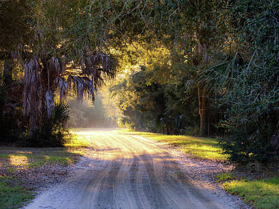 Photograph - Light, Shadows And An Old Dirt Road by Donnie Whitaker