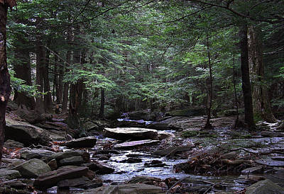 Photograph - Light Shimmering Through The Hemlock Canopy Of The Kaaterskill by Terrance DePietro