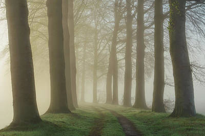 Morning Mist Photograph - Lights Shine Bright by Martin Podt