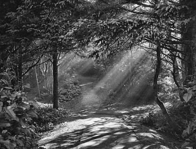 Photograph - Light Shines In The Forest by HW Kateley