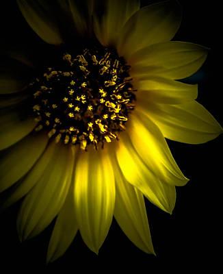 Photograph - Light Shining Through by Leticia Latocki