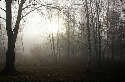 Photograph - Light Through The Fog by Debbie Oppermann