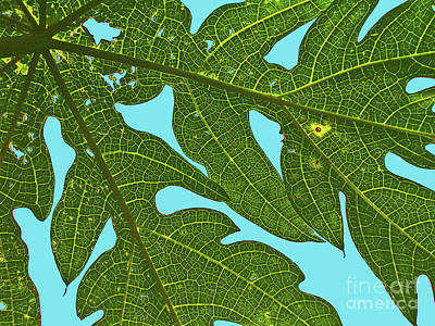 Photograph - Light Through The Leaves by Elizabeth Hoskinson