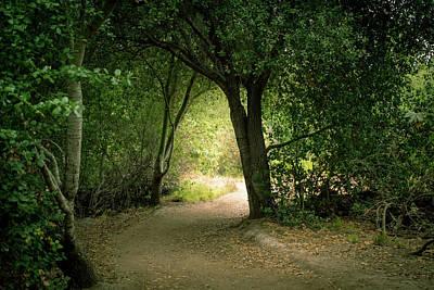 Light Through The Tree Tunnel Art Print