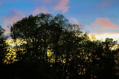 Photograph - Light Through The Trees by Bonnie Follett
