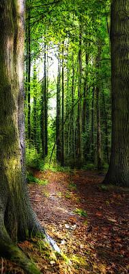 Magical Photograph - Light Through The Trees by Meirion Matthias