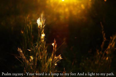 Photograph - Light To My Path by Roberto Aloi
