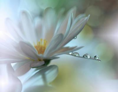 Photograph - ..light Touch... by Juliana Nan
