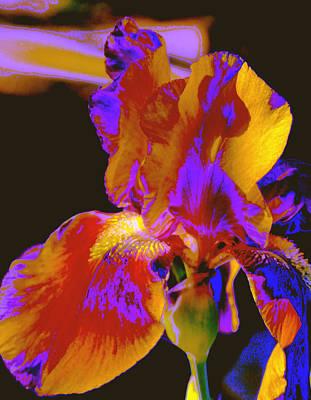 Photograph - Light Touch by M Diane Bonaparte