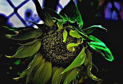 Digital Art - Light Touched Sunflower by Aliceann Carlton