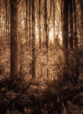 Creepy Photograph - Light Trough The Forest by Wim Lanclus