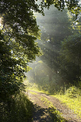 Gravel Road Photograph - Light Unto My Path by Thomas R Fletcher