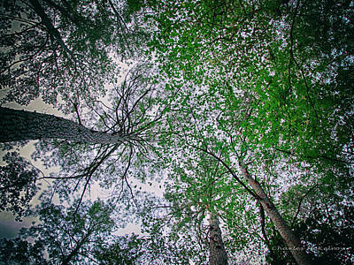 Photograph - Light Up Above by Charles McKelroy