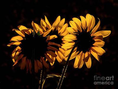 Photograph - Light Up My Petals by Deniece Platt