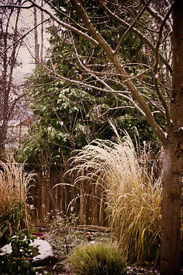 Photograph - Light Winter Snow by Mick Anderson