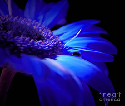 Blue Flowers Photograph - Light Within Me by Krissy Katsimbras