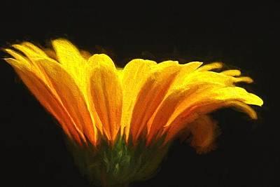 Photograph - Light Within by Nancie Rowan