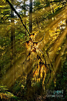 Photograph - Lightbeams In The Rainforest by Adam Jewell