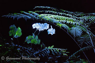 Photograph - Lighted Flowers by Les Greenwood