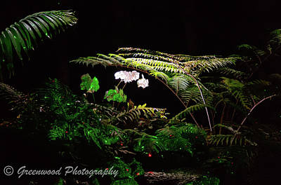 Photograph - Lighted Flowers1 by Les Greenwood