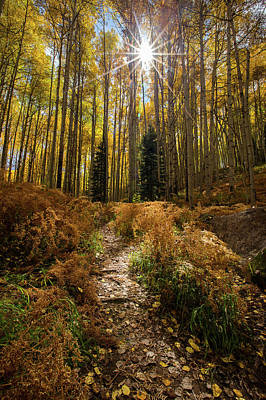 Photograph - Lighted Path by Ryan Smith