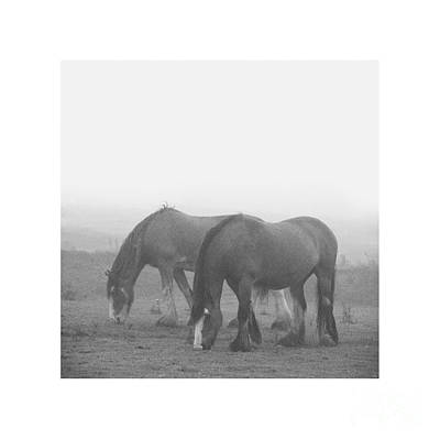 Photograph - Lighter Than Black - Dampened And Shrouded In Mist  by Paul Davenport