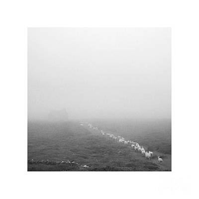 Photograph - Lighter Than Black - Descending To Sheep In The Clouds by Paul Davenport