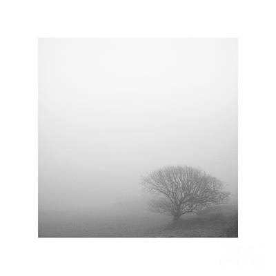 Landscapes Royalty-Free and Rights-Managed Images - Lighter Than Black - Tree on a hillside by Paul Davenport