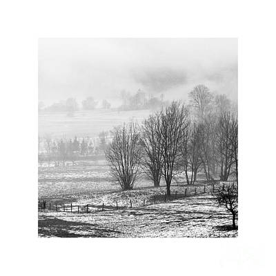 Photograph - Lighter Than Black - Trees In Myst by Paul Davenport