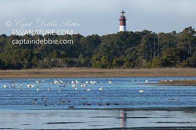 Photograph - Lighthouse Reflection With Swans 1 by Captain Debbie Ritter