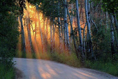 Photograph - Lighting The Way by Shane Bechler