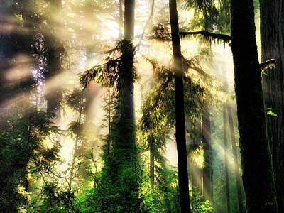 Photograph - Lightning The Forest by Leland D Howard